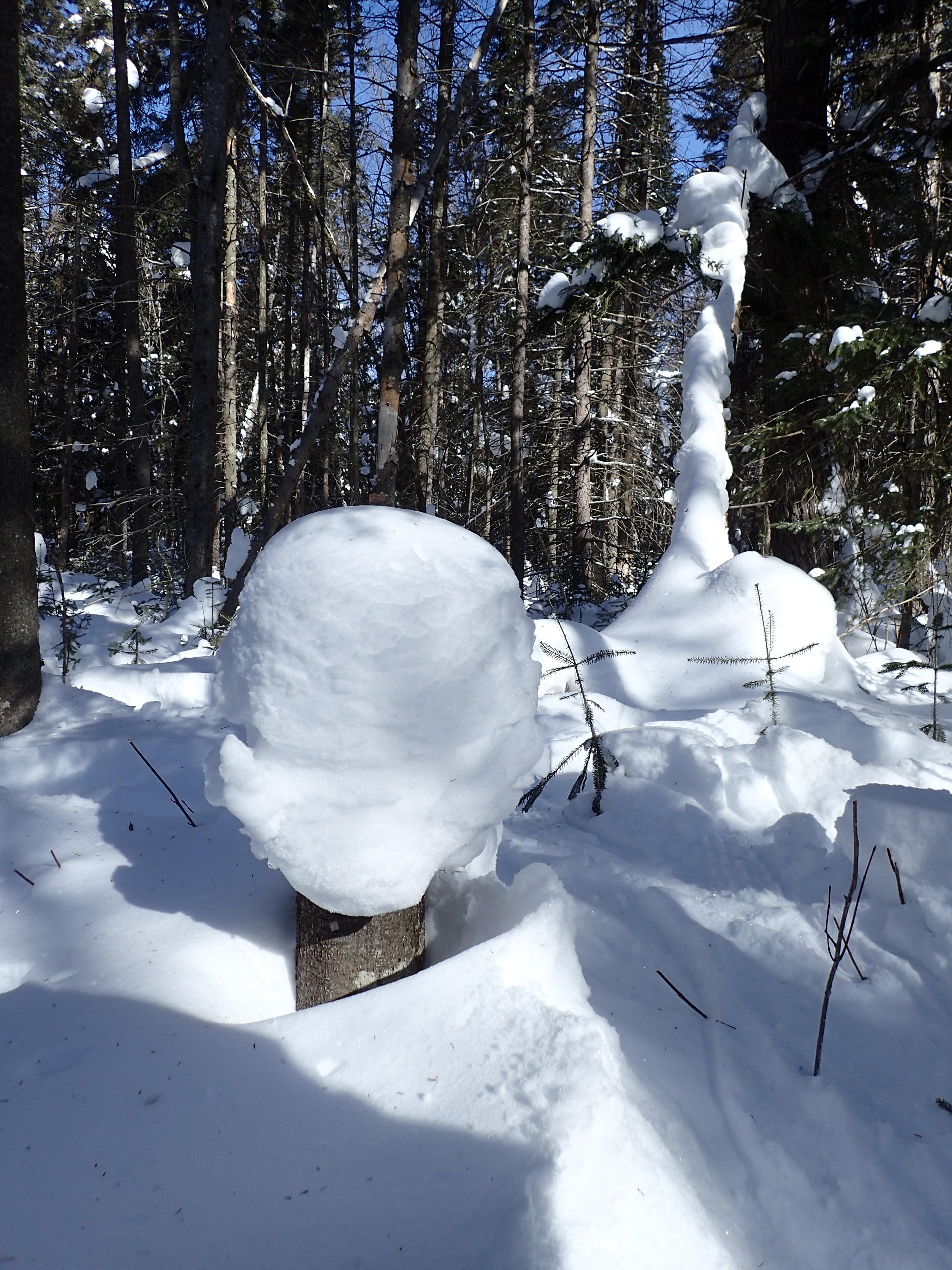 snow stump
