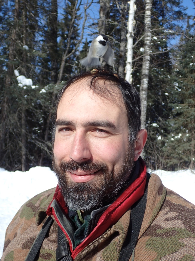 Chickadee on my head
